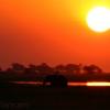Olifant in zonsondergang