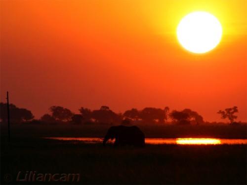 Olifant, zonsondergang, Chobe National Park, Botswana, Namibië, Zambia, Afrika