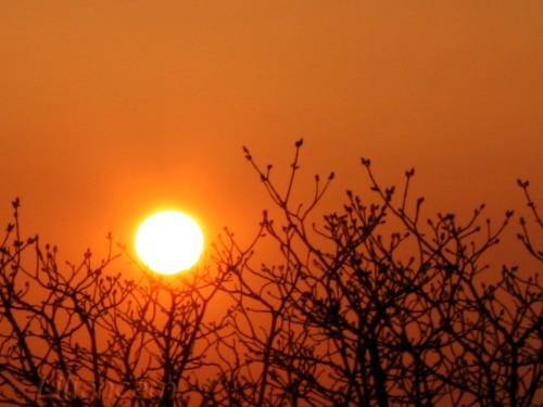 Zonsondergang, apeldoorn, kastanjeboom, knoppen,